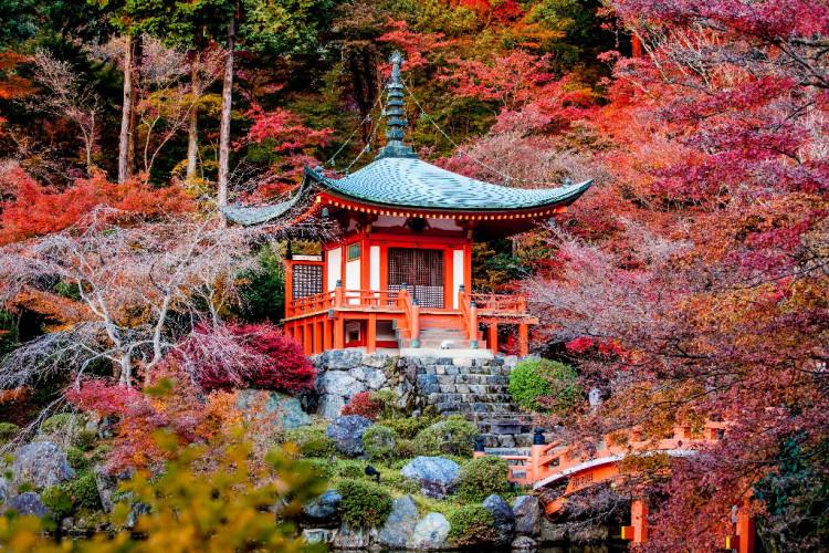 japonia-2021-in-culori-de-toamna_14_4905_1.jpg